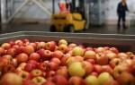 Как проявляется аллергическая реакция на яблоки у ребенка: вероятность возникновения и как уберечься