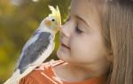 Проявление аллергии на попугаев у детей — симптомы и виды