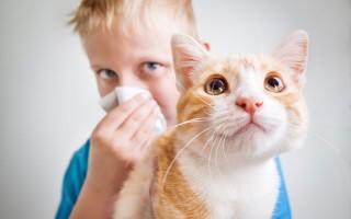 Особенности аллергии у ребенка, вызванной домашними животными: какие питомцы вызывают реакцию, и какие нет
