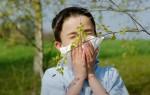 Возникновение аллергии на березу у детей, направления в лечении и профилактики патологии