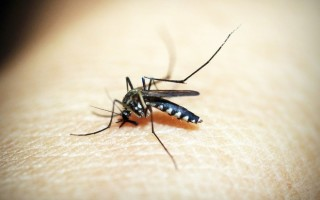 В чем опасность проявления аллергии у ребенка на укус комара: симптомы начала реакции, лечение