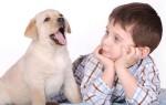 Главные проявления аллергической реакции на собак у детей