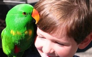 Особенности аллергической реакции на попугаев, как проявляется у ребенка, чем опасна и методы лечения