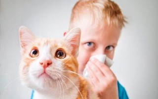 Проявления аллергии на кошек у детей