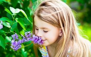 Как возникает аллергия на сирень: в каком возрасте у ребенка больше риск проявления