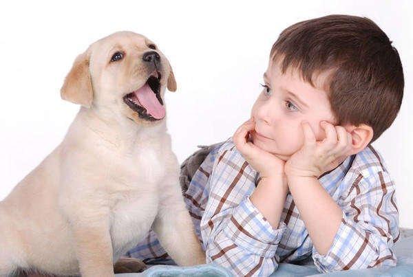 ребенок смотрит на щенка