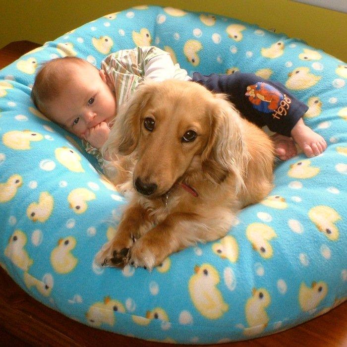собака и ребенок лежат на матрасе