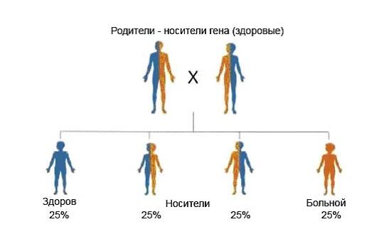 схема наследования муковисцидоза