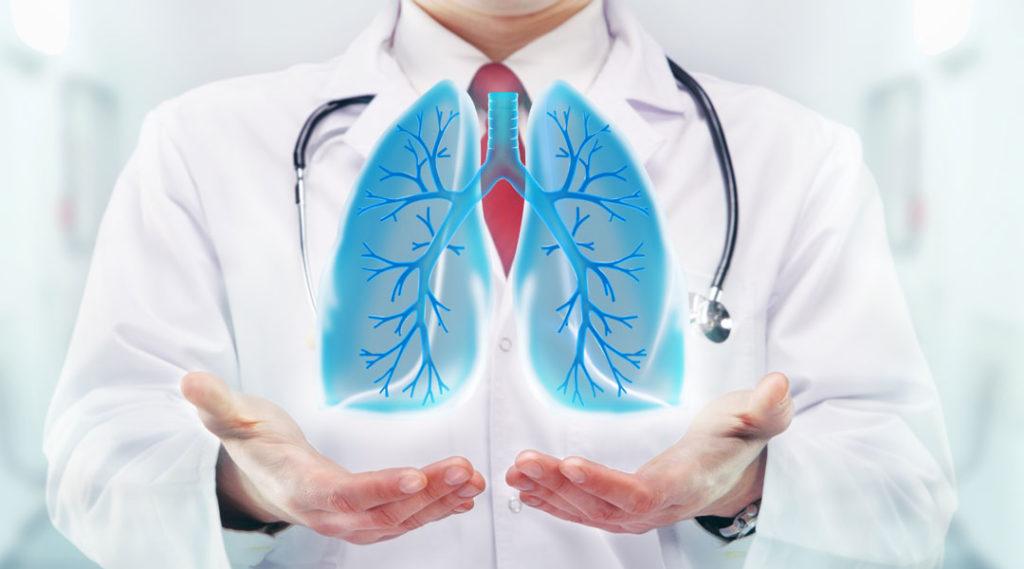 врач держит в руках макет легких