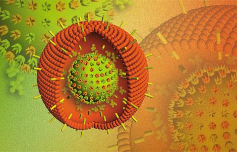 вирус эпштейна барр у детей - 3д схема