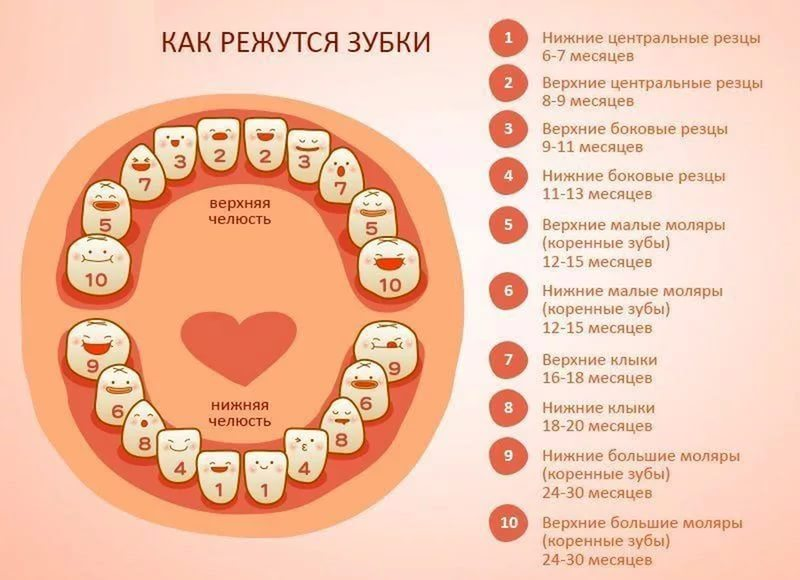Сколько зубов у ребенка в год - рассказывает детский стоматолог