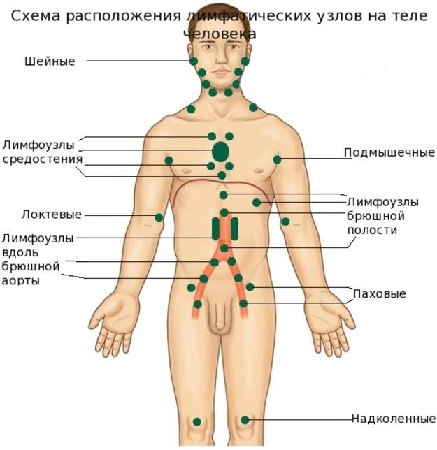 схема лимфоузлов на теле человека