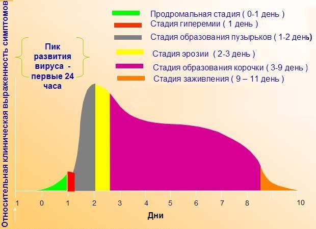 схема развития вируса