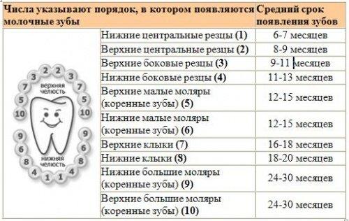 порядок и сроки прорезывания зубов