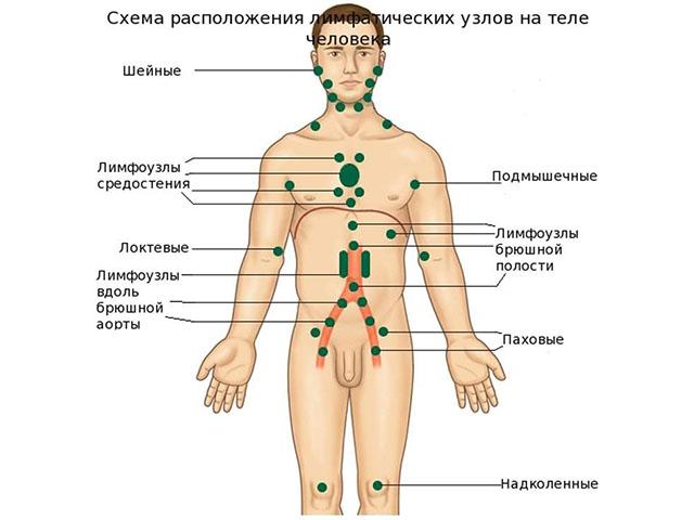 схема расположения лимфаузлов на теле человека
