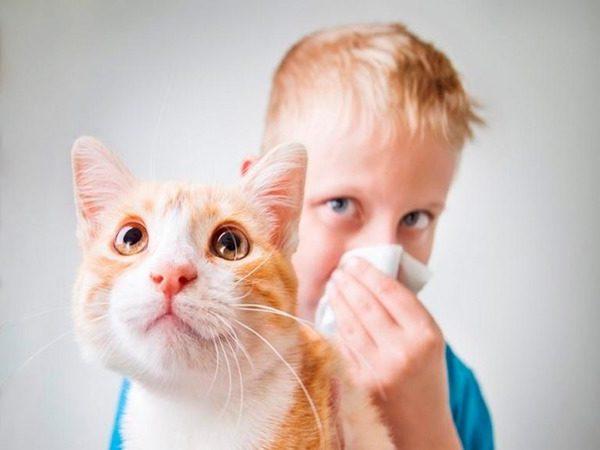 у мальчика аллергия на кота