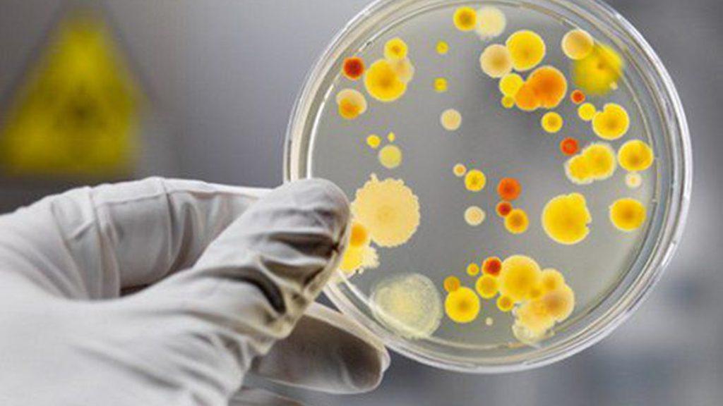 энтеровирусная инфекция у детей - посев на питательной среде