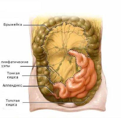 схема расположения лимфоузлов в брюшной полости