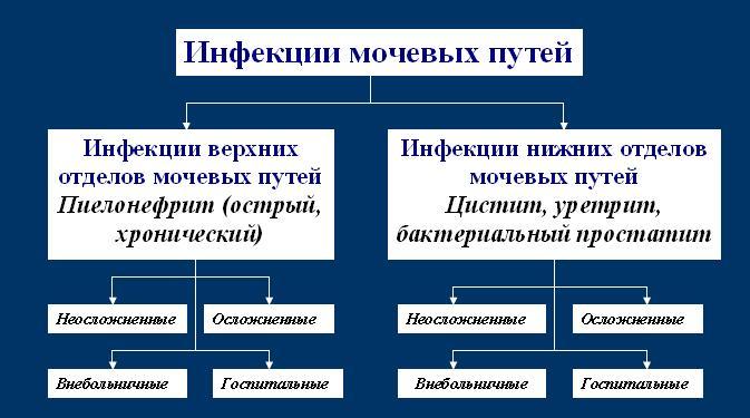 классификация инфекций мочевыводящих путей