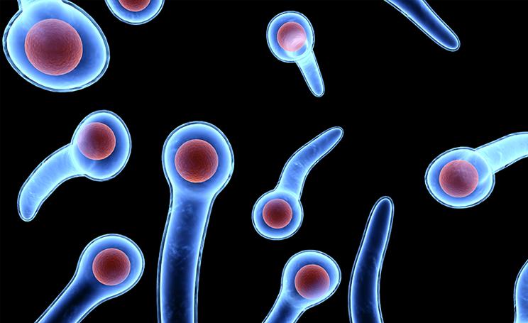 бактерия столбняка под микроскопом
