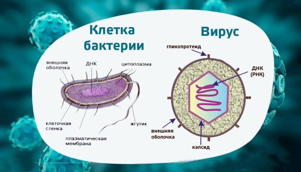 отличие вирусов от бактерий