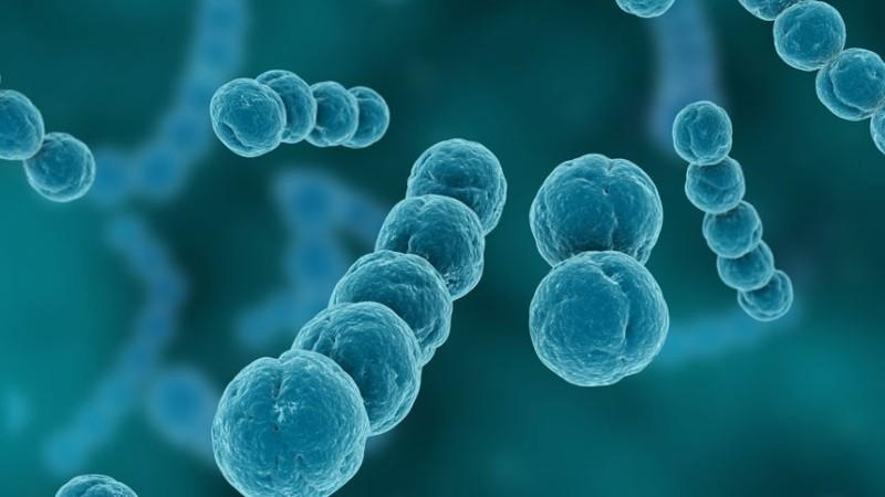 стрептококковая инфекция у детей - вид под микроскопом