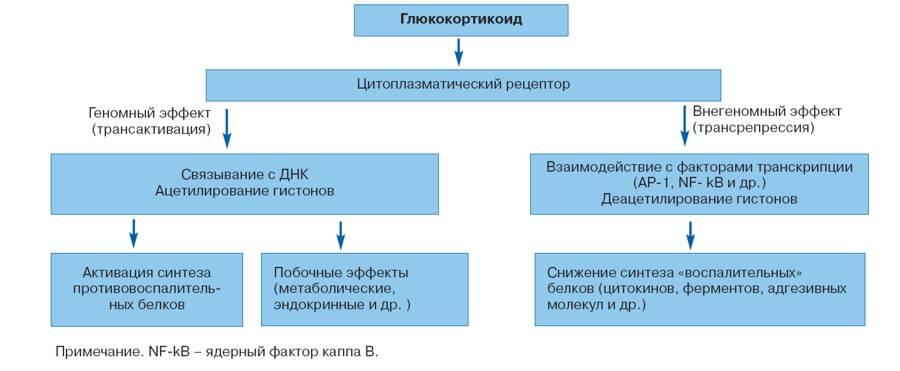 схема работы глюкокортикоида