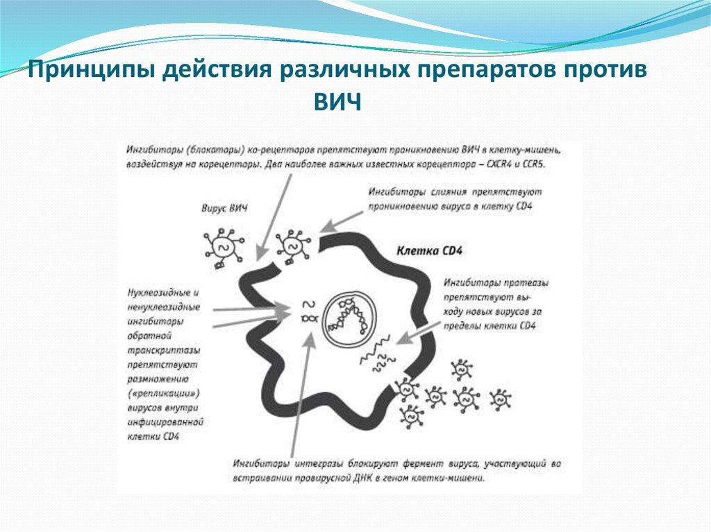 Принципы действия различных препаратов против ВИЧ