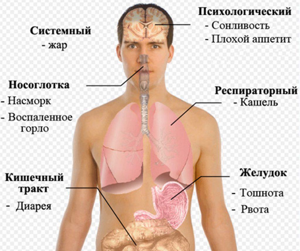 Симптомы кишечного гриппа на схеме человека