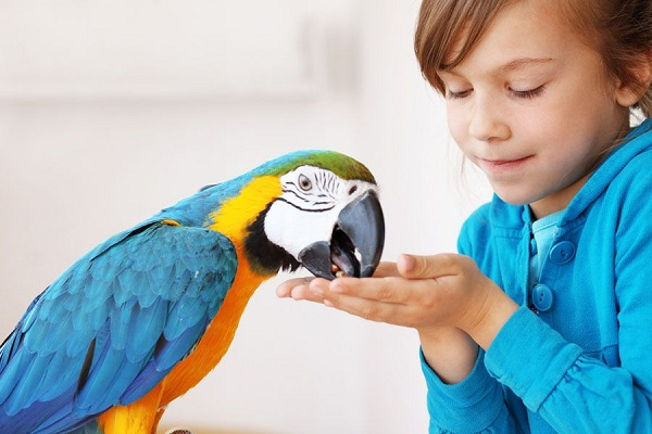 девочка кормит попугая с рук