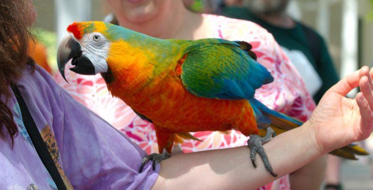огромный попугай на руке