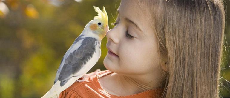 Попугай на плече девочки