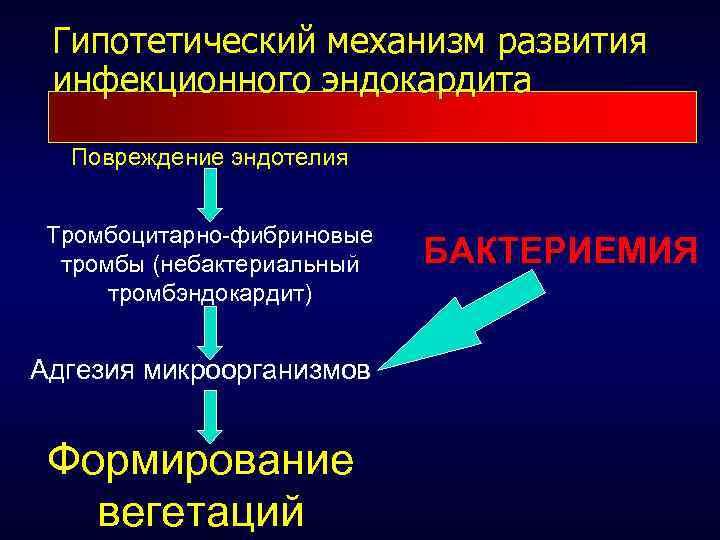 схема развития инфекционного эндокардита