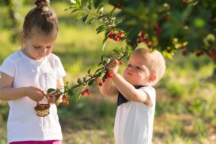 дети собирают плоды