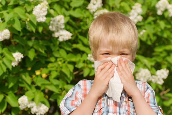 Ребенок, аллергия на хомяков