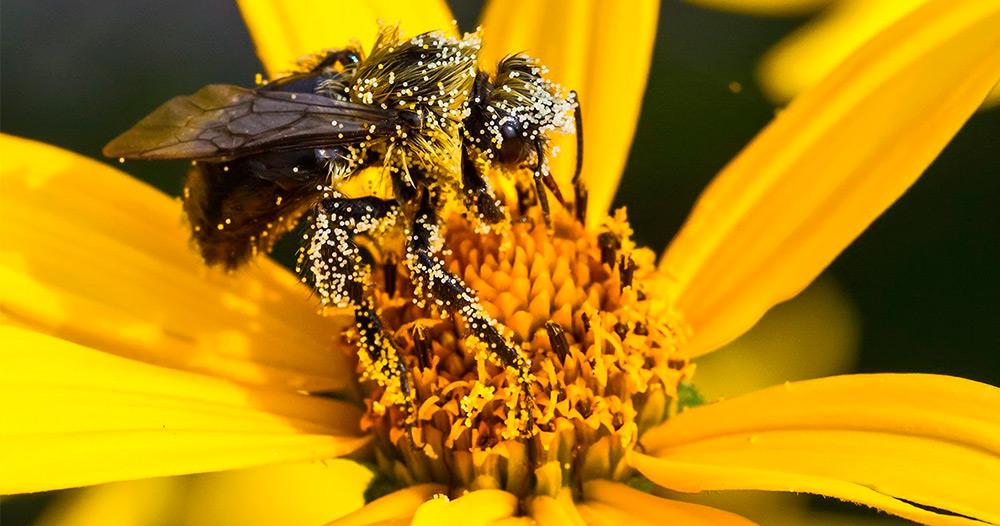 Пыльца, аллергия, ребенок