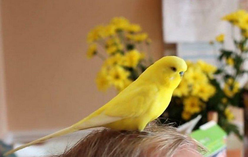Попугай, аллергическая реакция у ребенка