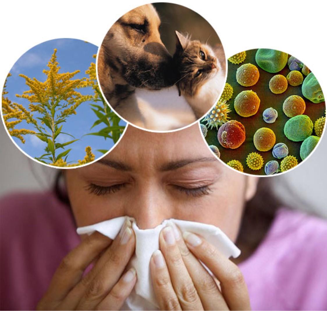 Аллергены, респираторная аллергия у ребенка