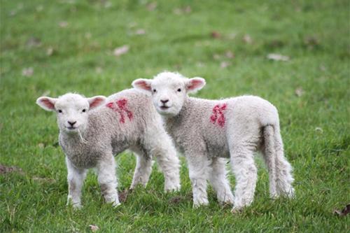Животные, аллергическая реакция на шерсть у ребенка